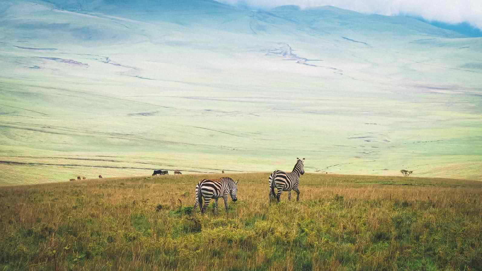 The landscape of the Ngorongoro Conservation Area is out of this world spectacular.