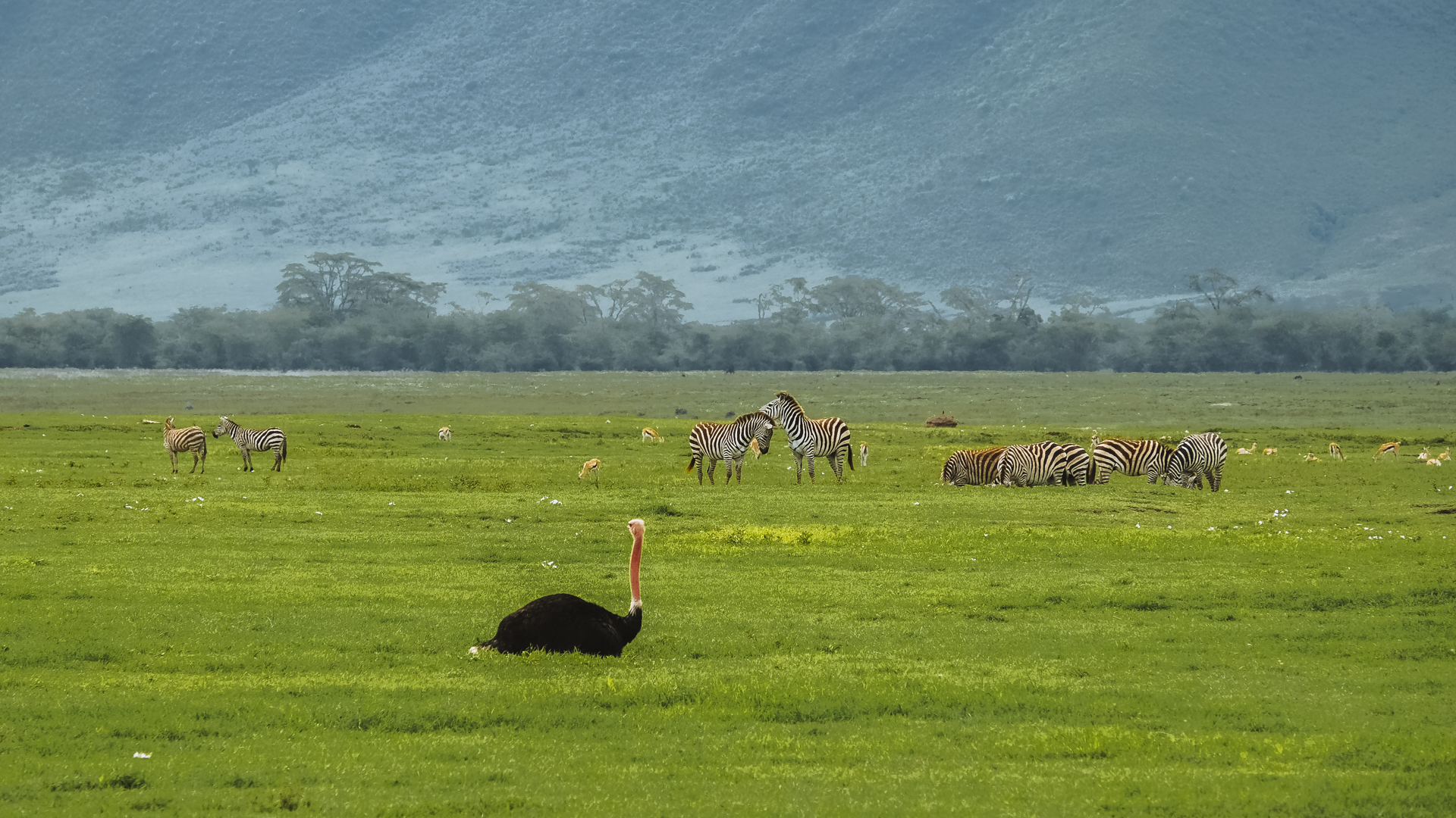 If you're worried about not spotting any animals on your safari, come to Ngorongoro, they are everywhere.