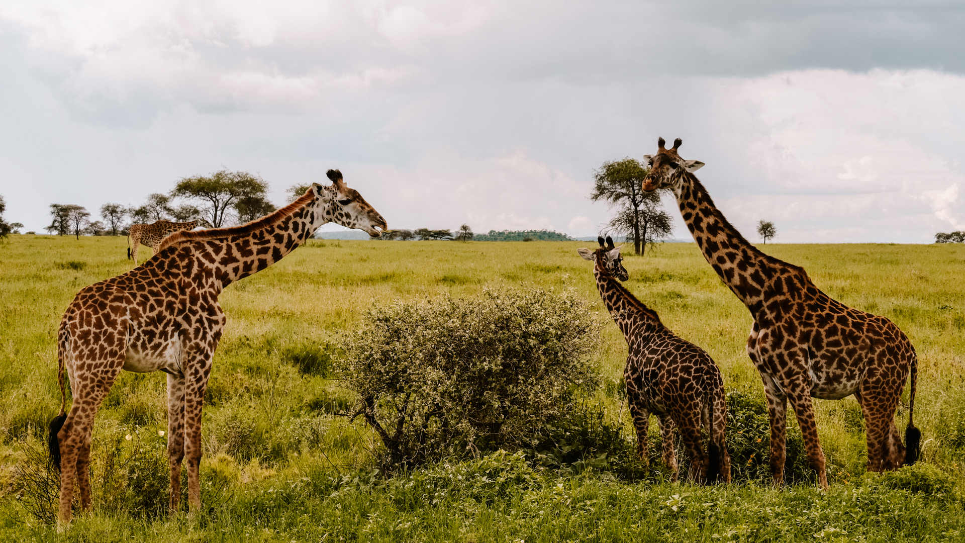 Looks like the little one is trying to reason with his parents in the Serengeti National Park, Tanzania