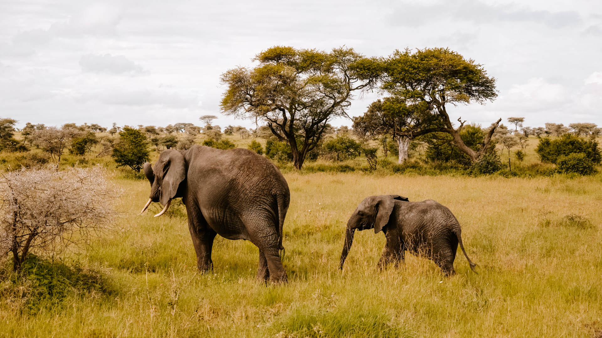 Mother with baby elephant in the Serengeti National Park, Tanzania