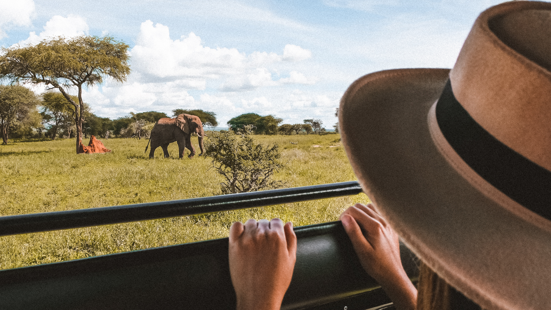 Watching an old elephant passing by from the jeep in the Serengeti National Park, Tanzania