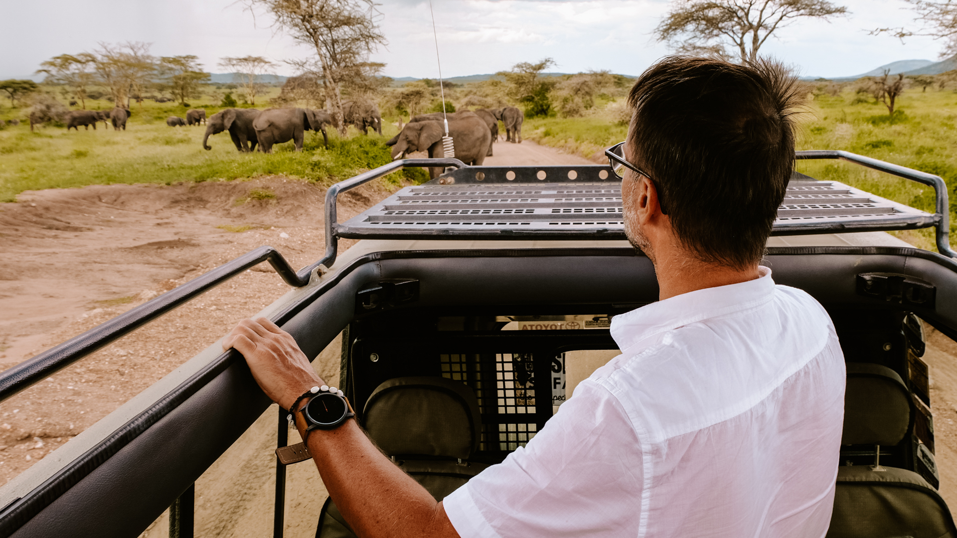 Wildlife close encounter, a herd of bush elephants, from the safety of our jeep in the Serengeti National Park, Tanzania