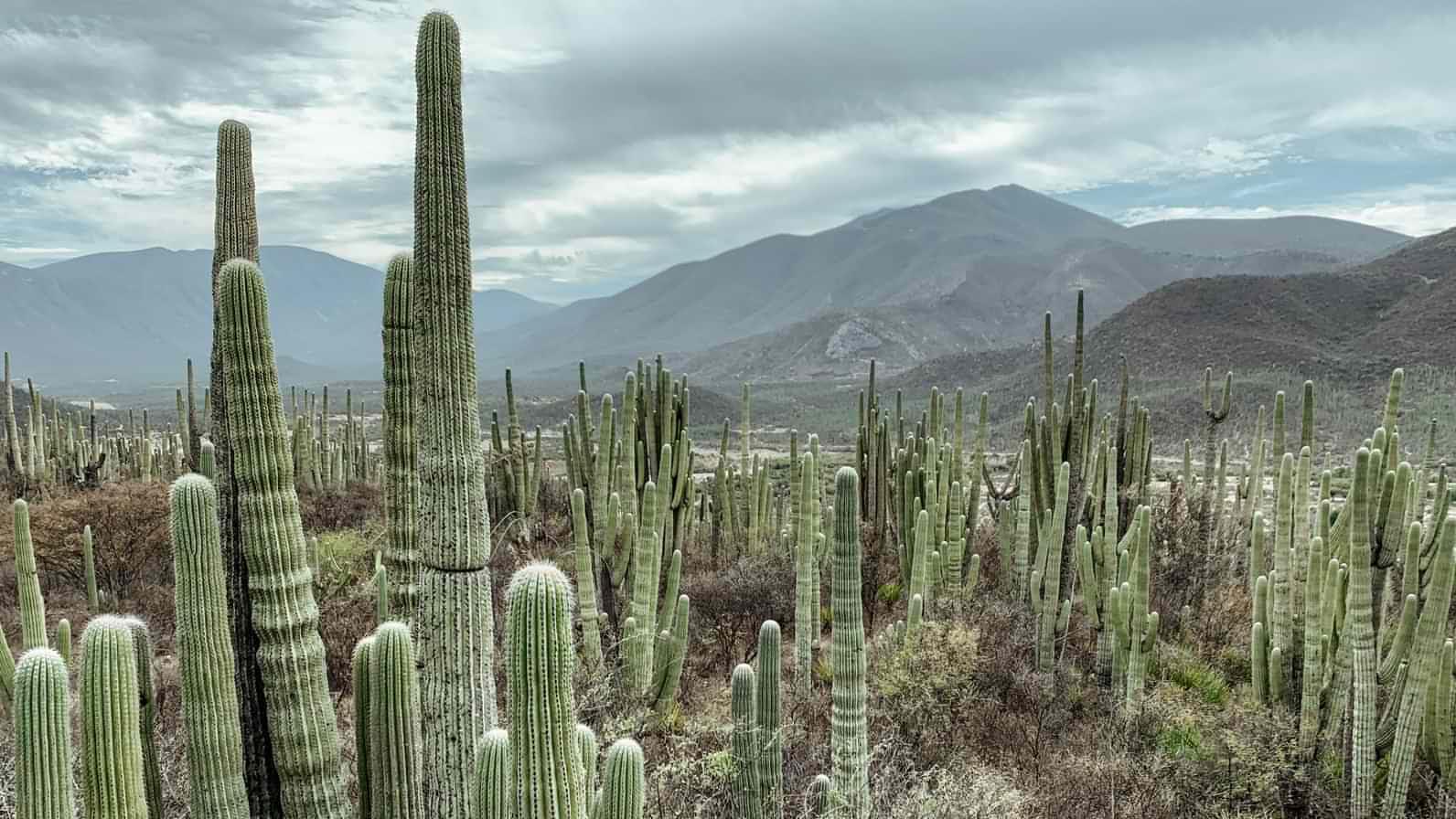 Tehuacán-Cuicatlán Valley UNESCO World Heritage Site in Tehuacán, Puebla, Mexico